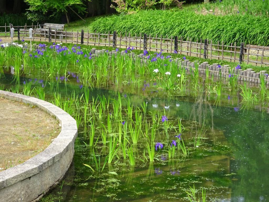 緑地 大泉
